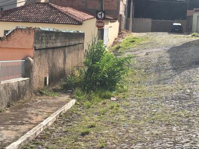 Mato alto na Rua Wolney Soares
