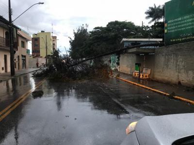 Árvore cai e interdita rua